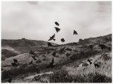 Birds, Tennessee Valley by Unai San Martin