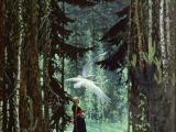 Swans by KonstantinVasiliev