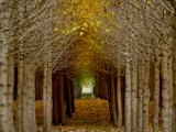 Archway by Sandy Harris