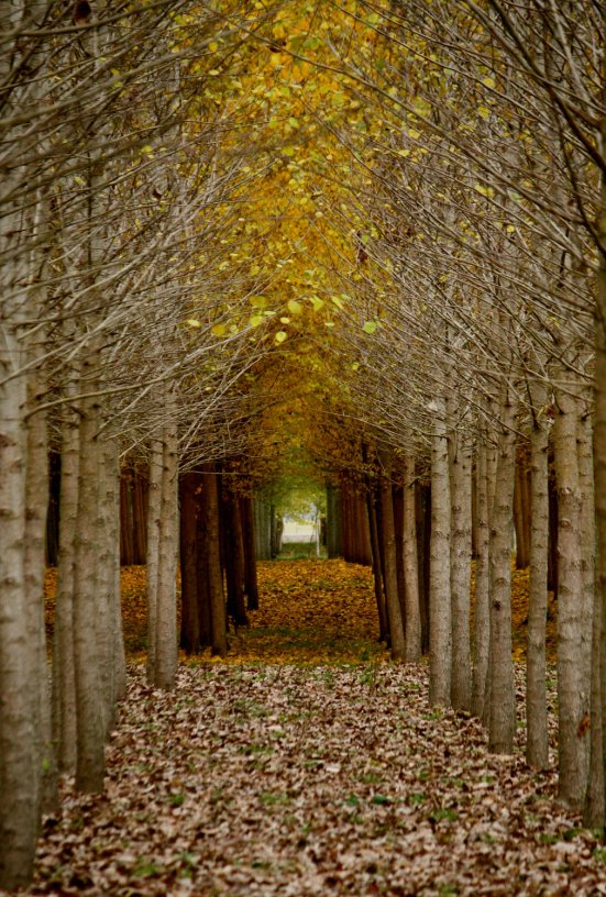 Archway by Sandy Harris | Gathered Nettles
